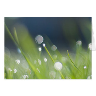 Morning Dew Note Card