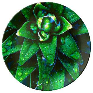 Morning Dew On Plant Porcelain Plates