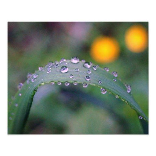 Morning dew photo print