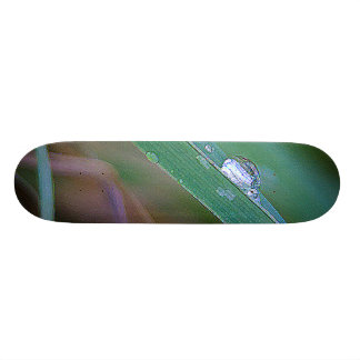 Morning Dew Custom Skate Board