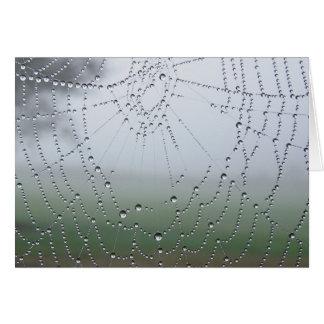 Morning Dew Spider Web Greeting Card