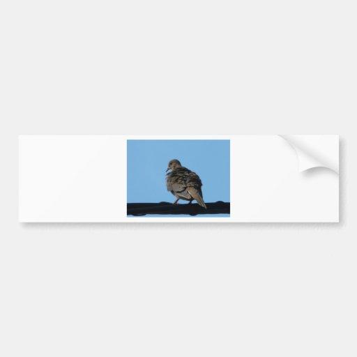 morning dove bumper sticker