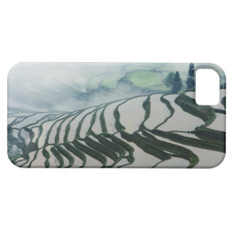 Morning Fog Above Rice Fields iPhone 5 Case
