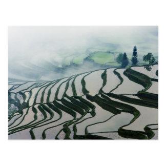 Morning Fog Above Rice Fields Postcard