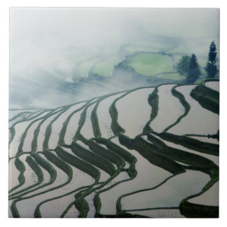 Morning Fog Above Rice Fields Tile