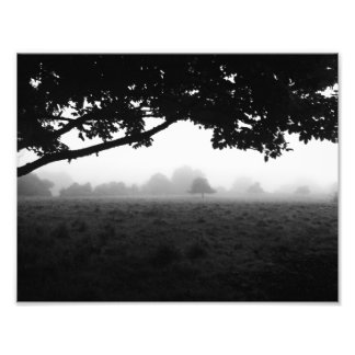 Morning Fog Emerging From Trees Photographic Print