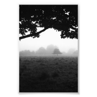 Morning Fog Emerging From Trees Photograph
