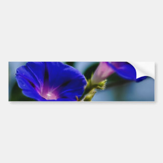 Morning Glory and meaning Bumper Sticker