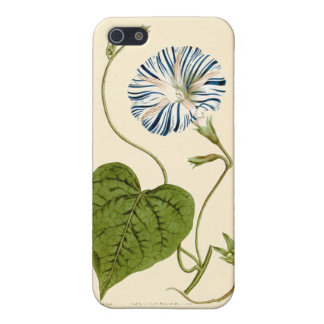 Morning Glory Blue Illustration iPhone 5/5S Covers