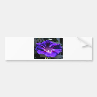 Morning Glory Bumper Stickers