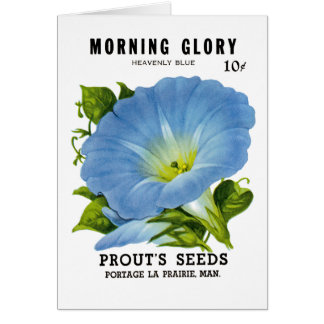 Morning Glory Vintage Seed Packet Greeting Card