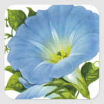 Morning Glory Vintage Seed Packet Sticker