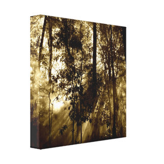 Morning in Forest Canvas Print