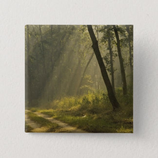 Morning light beams through trees in jungle 15 cm square badge