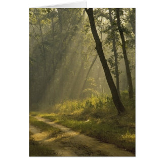Morning light beams through trees in jungle card