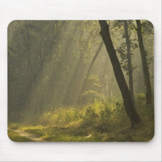 Morning light beams through trees in jungle mouse pad