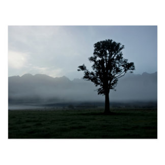 Morning Mist • Postcard