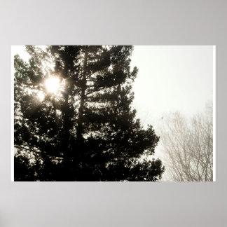 Morning Pine Print