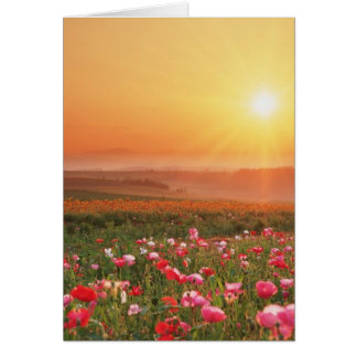 Morning Poppies Card
