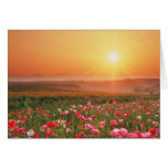 Morning Poppies Greeting Cards
