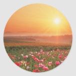 Morning Poppies Round Stickers