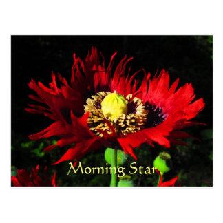 Morning Star Postcard
