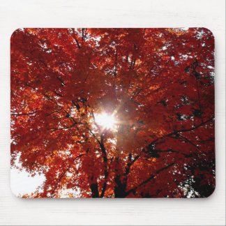 Morning Sun in Tree Mouse Pad