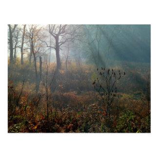 morning sun @ the wetlands postcard