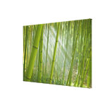 Morning sunlight filtering through bamboo stretched canvas prints