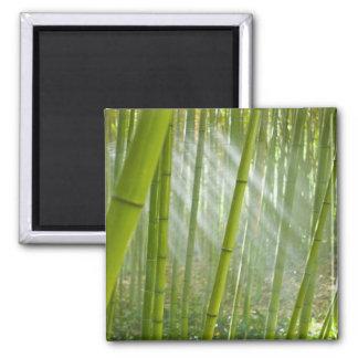 Morning sunlight filtering through bamboo magnets