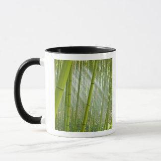 Morning sunlight filtering through bamboo mug