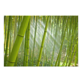 Morning sunlight filtering through bamboo photo print