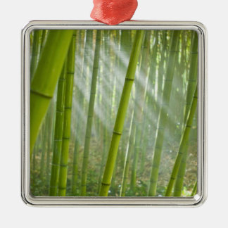 Morning sunlight filtering through bamboo Silver-Colored square decoration