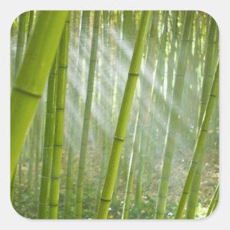 Morning sunlight filtering through bamboo square sticker