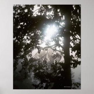 Morning sunlight through foliage of jungle poster