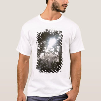 Morning sunlight through foliage of jungle T-Shirt