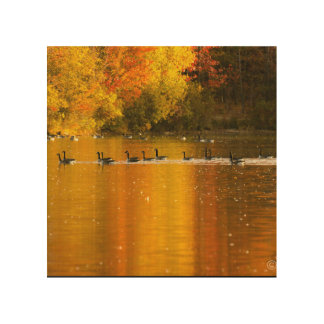 morning sunshine,golden glow,serene,fall colors wood canvas