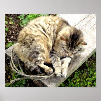 Morning Tiger Nap Posters
