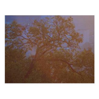 Morning Tree Postcard