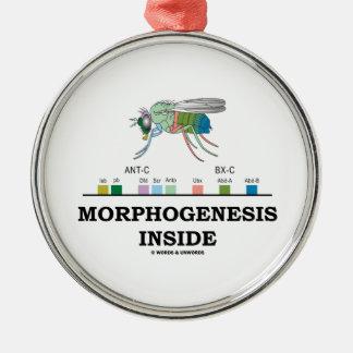 Morphogenesis Inside Drosophila Fruit Fly Genes Silver-Colored Round Decoration