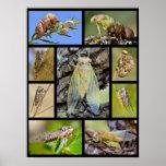 Mosaic photos cicadas poster