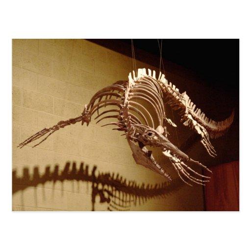 "Mosasaur - ""Sea Lizard"" Post Card"