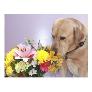 Moses Smells Flowers Postcard