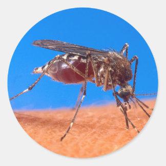 Mosquito Biting Classic Round Sticker