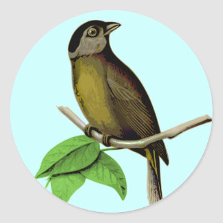 Moss-backed Tanager Bangsia Edwardsi Classic Round Sticker