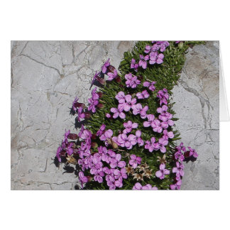 Moss Campion in the Alps Card