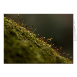 Moss Card