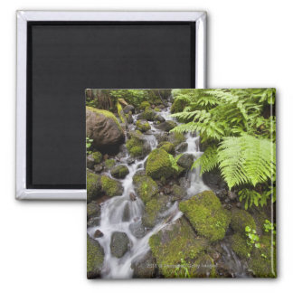 Moss covered rocks with blurred water and ferns magnet
