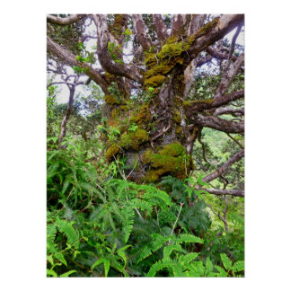 Moss-covered Tree and Ferns Poster