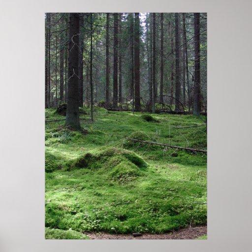 Moss Forest Print